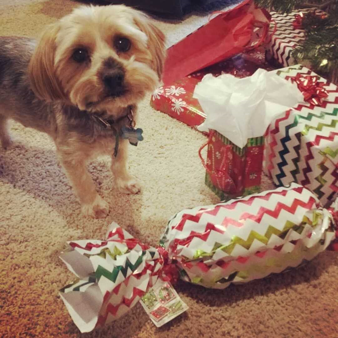 What to buy your dog for Christmas image