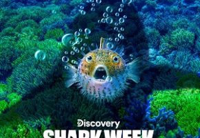 dsc_shark_week_2019_SQUARE_7_19_19_sm