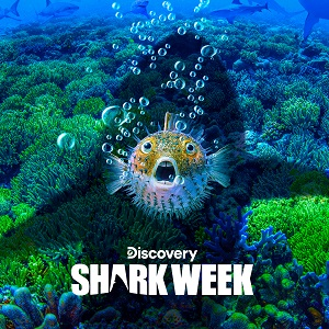 dsc_shark_week_2019_SQUARE_7_19_19_sm